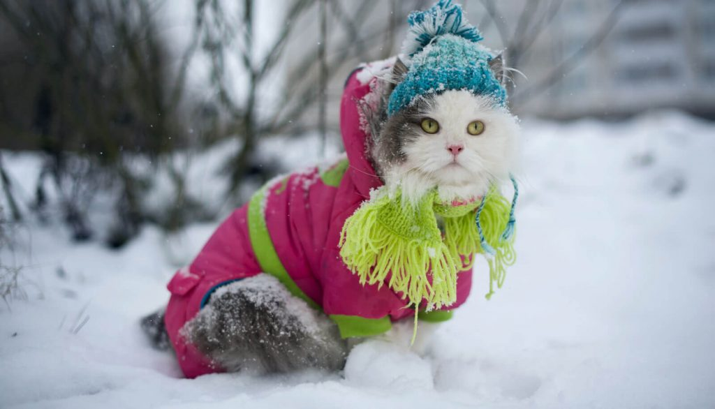 Veterinary Referral and Emergency Center - Cat in the Snow