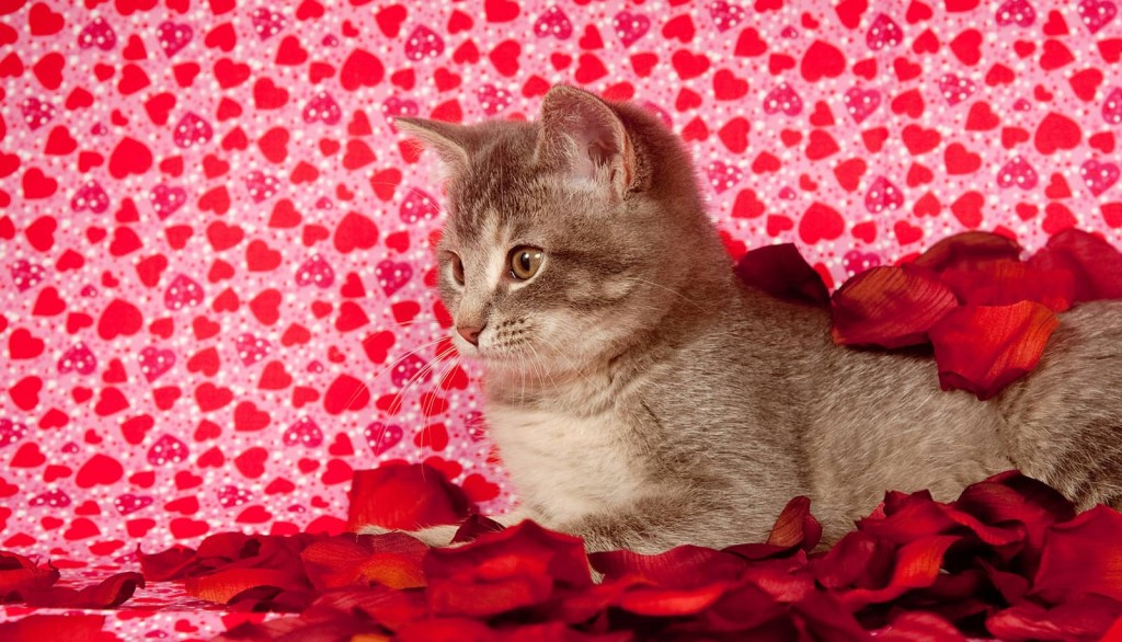 Kitten in Love for Valentines Day