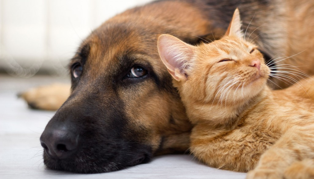 Veterinary Referral and Emergency Center - German Shepherd and Cat
