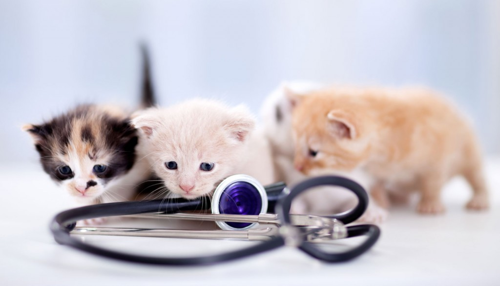 Veterinary Referral and Emergency Center - Kittens