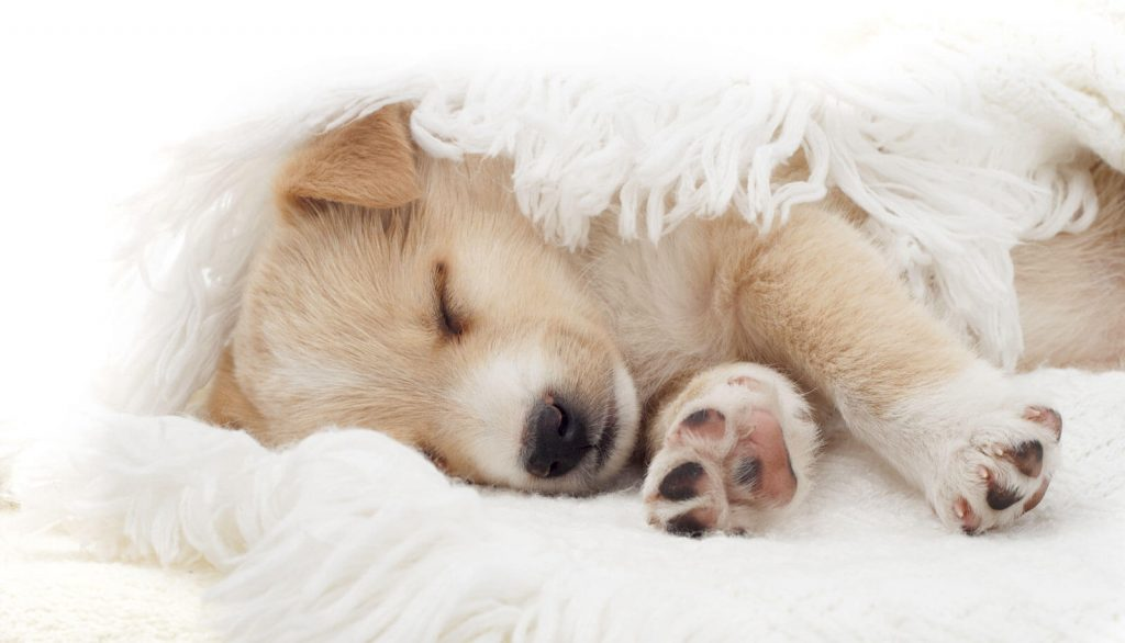 Veterinary Referral and Emergency Center - Sleeping Puppy