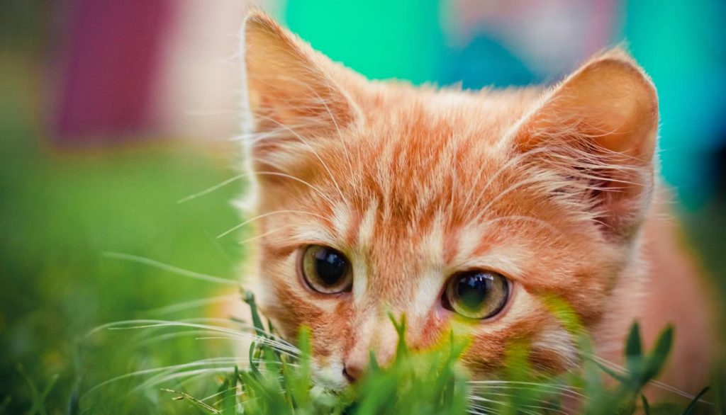 Veterinary Referral and Emergency Center - Cat in Grass