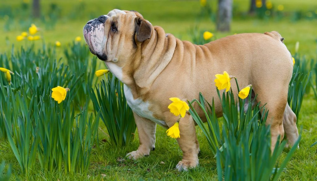 Veterinary Referral and Emergency Center - Dog in Flowers