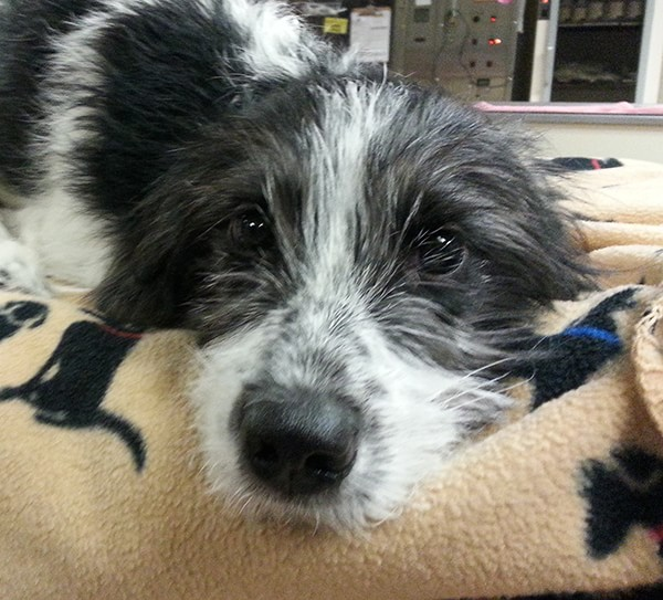 Veterinary Referral and Emergency Center - Angel Fund Success Stories - Bella the Dog