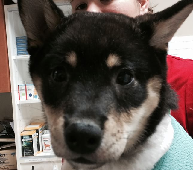 Veterinary Referral and Emergency Center - Angel Fund Success Stories - Barack the Dog