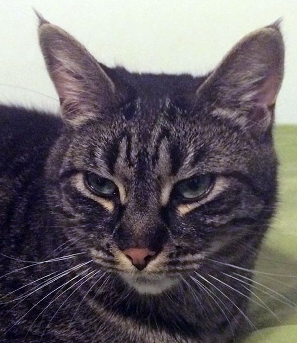 Veterinary Referral and Emergency Center - Angel Fund Success Stories - Jax the Cat