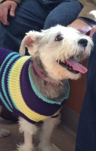 Veterinary Referral and Emergency Center - Angel Fund Success Stories - Heine E.