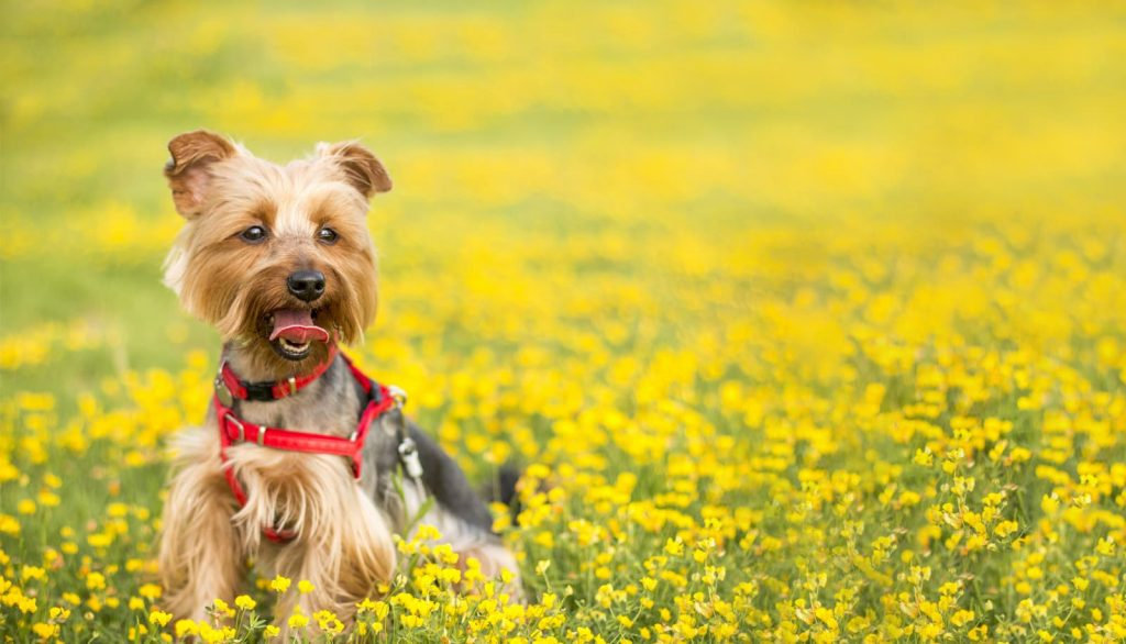 Dog standing in a field of flowers